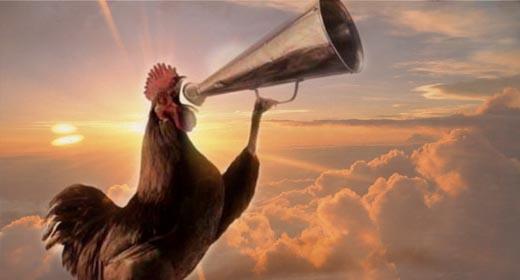 Hasil gambar untuk ayam berkokok
